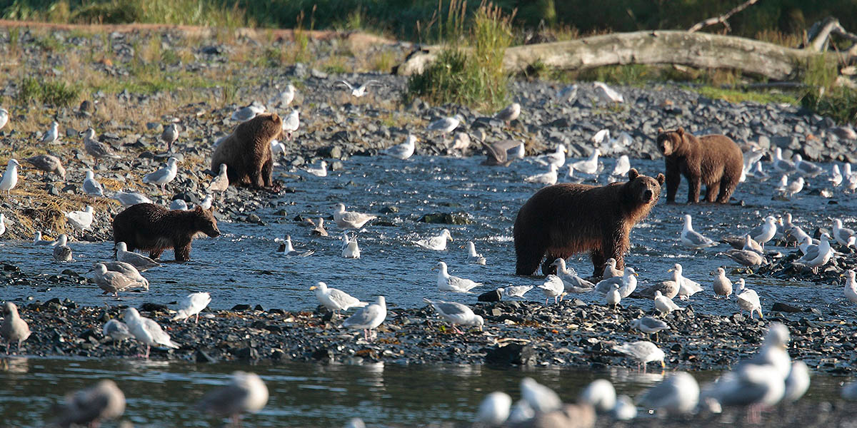 Spirit of Alaska Bear Viewing Tours