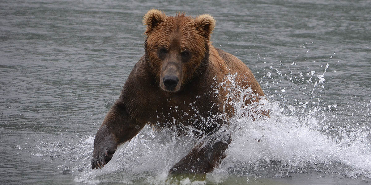 Wildlife Tours Alaska