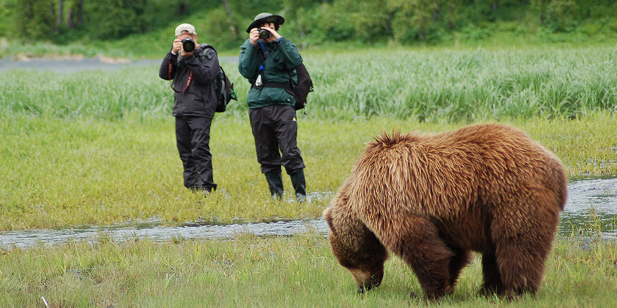 Photographing Alaskan Brown Bears