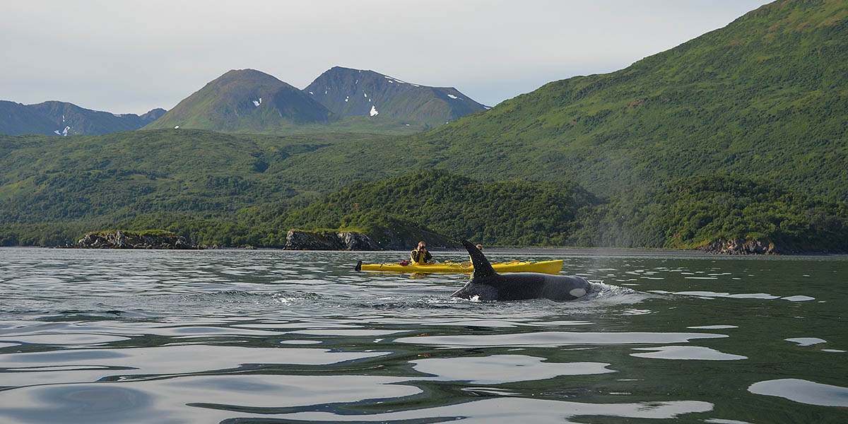 Kayaking with the Whales