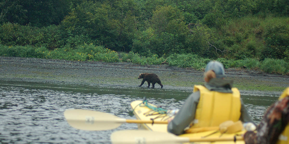 Brown Bear on the Shoreline