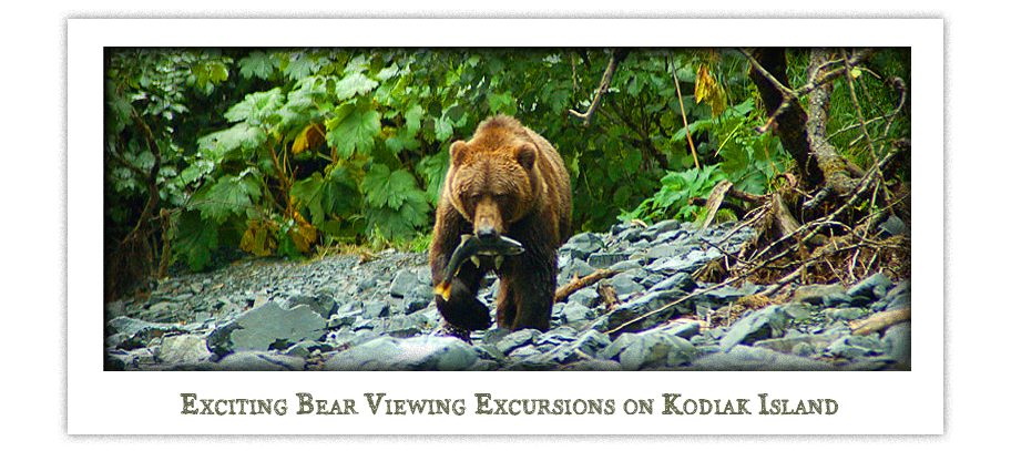 Kodiak Island Wildlife Viewing